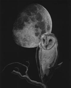 Barn_Owl_sm