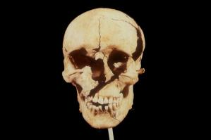 t2-skull_141186c